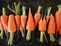 The carrot is a 'tiny ginseng' - Ping Ming Health