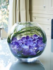 Vanda Orchids in a Glass Goldfish Bowl