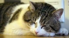 3,000 cats encourage a childhood cancer patient.CNN.co.jp : 3000匹の「猫」が小児がん患者を激励 米シアトル小児病院