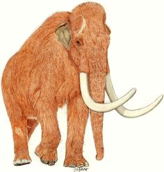 Songhua River Mammoth