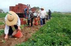 Εκλογές για τους Νέους Αγρότες της Λακωνίας   Laconialive.gr – Η ενημερωτική ιστοσελίδα της Λακωνίας, Νέα και ειδήσεις