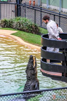 Croc show at Australia Zoo in Queensland, Australia