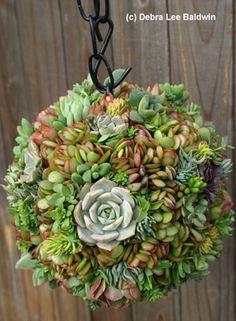 hanging succulent garden ball -- 2 baskets zip tied