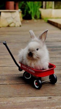 Omg, a Bun in a wagon.
