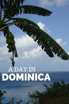 Top tips for traveling in #Dominica, whether it's for a week or on a #cruise.
