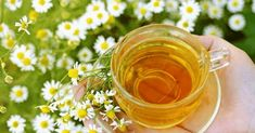 See 8 supplements to improve digestive health, including probiotics, psyllium, ginger, l-glutamine and more from WebMD. Detox Kur Plan, Herbal Remedies, Home Remedies, Headache Remedies, Migraine Headache, Chamomile Tea Benefits, Chamomile Recipes, Roman Chamomile, Health Tips