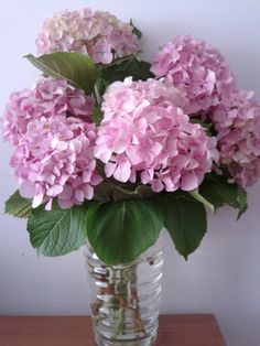 """""""I must have flowers, always, and always."""" ― Claude Monet"""