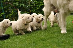 Artificial grass is perfect for potty training puppies!