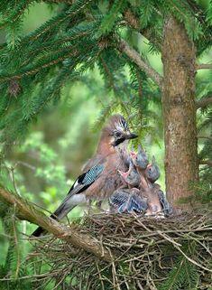 Mom bird and family