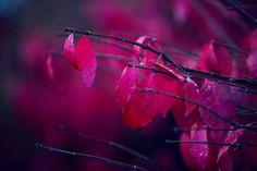 Canada - Anton Repponen Photography