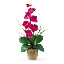 Phalaenopsis in Beauty Pink | Silk Orchid Arrangement | Nearly Natural