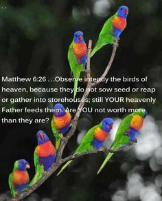 Observe intently the birds of heaven, because they do not sow seed or reap or gather into storehouses; still YOUR heavenly Father feeds them. Are YOU not worth more than they are? Matthew 6 26, Before You Judge Me, Jw Humor, Keep The Faith, Bible Truth, Jehovah's Witnesses, Bible Scriptures, Bible Quotes, Heavenly Father