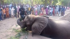 Giant Elephant Recognizes Nigerian Soldiers In The Forest,Bows Down To Them.PICS - Politics - Nigeria