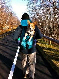 backpack corgi @Donna Peters Rouiller see we can totally get a corgi and take him on hikes.