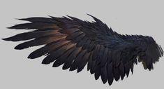 Raven Wings, Bird Wings, Demon Wings, Raven Bird, Art Sketches, Art Drawings, Bild Tattoos, Eagle Wings, Crows Ravens