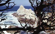 Point Lobos State Reserve (Carmel), scenic, birds, and sea lions, seals, otters