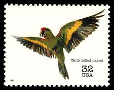 32c Thick-billed Parrot stamp from the Endangered Species series.