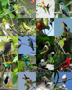 Varias especies de aves Imagem de aves, conheça as mais belas espécies