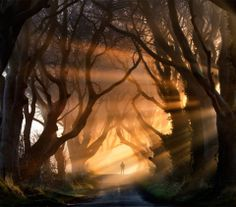 The Dark Hedges are a beautiful old avenue of Beech Trees that line the Bregagh Road near the village of Armoy, Co. Antrim, Northern Ireland. Photo by Stephen Emerson