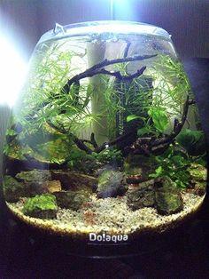 fish bowl