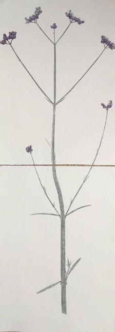 "Saatchi Art Artist Marta Wakula-Mac; Printmaking, ""Verbena I - Limited Edition 1 of 1"" #art"