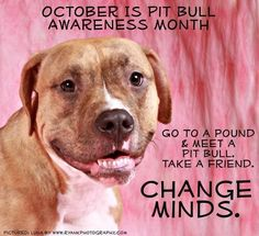 Pit bull Awareness Month...
