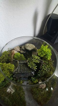 My second minigarden.  The Chinese house is house you can buy in aquariumshops.  The green is moss. The basis is Potting soil and decoration Stones.