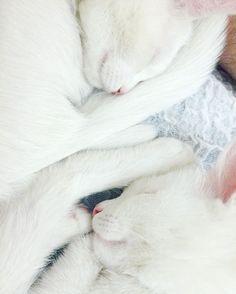 gatos-gemeos-mais-bonitos-do-mundo-5.jpg (700×874)