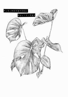 Monstera deliciosa #illustration by grace Travis malone #dotwork #art #drawing #plant