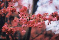 sit beneath the mango tree. Indulge your imagination: passion