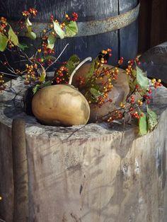Gourds & Bittersweet in hornbeam