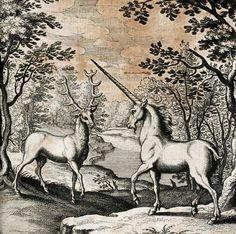 Dyas chymica tripartita, 1625