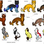 Clans of wild cats—ThunderClan, ShadowClan, WindClan, and RiverClan