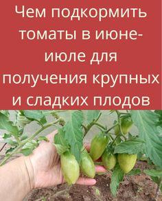 Farm Gardens, Vegetable Garden, Sprouts, Cooking Recipes, Vegetables, Garden, Tomatoes, Lawn And Garden, Platform Bed