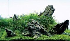 The Home Based » Blog Archive » Landscape Aquariums