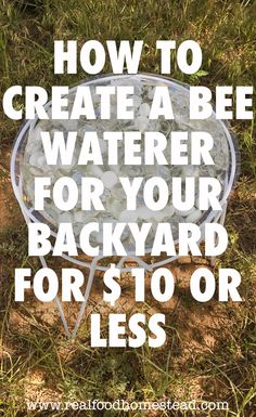 Have you thought of making a bee waterer for your garden? It is a cheap and simple way to help the bees and butterflies stay hydrated every day. Raising Bees, Backyard Beekeeping, Modern Homesteading, Water Sources, Plastic Pots, Stay Hydrated, Save The Bees, Bee Keeping, Survival Skills