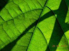61/365 Natural, ca Aloe Vera. Cu DA NU: Au trecut 59 de zile din 2015. 59/365