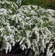 norjanangervo Chinese Proverbs, Garden, Plants, Sweet, Candy, Garten, Lawn And Garden, Gardens, Plant