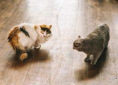 How to Stop Fighting Between Cats | petMD