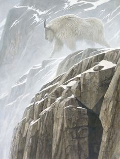 Mountain Goat by Robert Bateman.  See several paintings of his I like. There were so many mountain goats along the fjords going from Juneau to Skagway in Alaska.