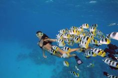 Snorkeling in Sharm El-Sheikh where you can spend a memorable time in the marvelous sunny beaches and enjoy other kind of water sports such as swimming, Snorkeling and see the beautiful coral reefs, diving and a lot more.