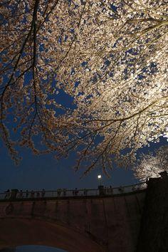 金沢城石川橋の上で桜を眺める人たち。夜桜 Kanazawa, Scenery, Louvre, Japan, In This Moment, Travel, Viajes, Landscape, Destinations