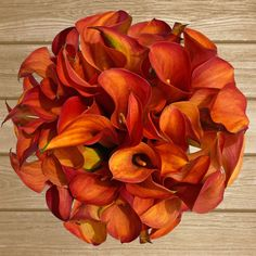Mini Callas Mango- Orange - EbloomsDirect #Mini #Calla #Lily #Orange #Mango #roses, #Promo, #Flowers #wedding, #events, #bouquets, #arrangement, #party, #fall, #winter, #summer, #spring, #harvest, #Christmas, #garden, #centerpieces, #autumn, #tropical,#recipes,#decor,#bridal,#floral,#DIY,#gift,,#online,#valentines,#bride,#ideas,#blooms,#anniversary, #mothers #day, #baby #gardening #plants, #holidays #fashion #home, #decor, #USA, #Costco, #art, #Texas ,#design, #Sams ,#bulk…
