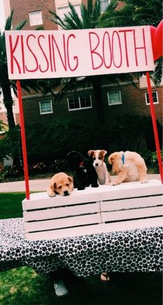 a happy place - * ~ * - # a # happy # place - dogs - # happy . - a happy place – * ~ * – # a # happy # place – dogs – # happier - Baby Witze, Baby Dogs, Cute Dogs And Puppies, I Love Dogs, Doggies, Corgi Puppies, Cute Little Animals, Cute Funny Animals, Cute Animal Photos
