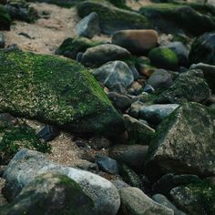 Some rocks on the beach.  Shot with a Nikon D3200  Edited with VSCO  #photography #photo #picture #camera #photographer #vsco #vscocam #jj #jj_community #creative #art #edit #joshsterckx #lgg3 #nikon #d3200 #nikond3200 #wales #southwales #creative #capturethecreative #mumbles #mumblespier #rocks #beach #seaweed