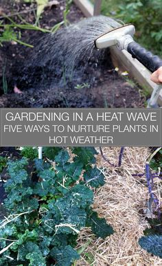 Growing food gives us a front-row seat to changes in climate and weather. When gardening in a heat wave, we need to keep our plants irrigated. Here's how.