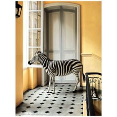 Deyrolle Zebra Composition #1 | From a unique collection of antique and modern photography at http://www.1stdibs.com/furniture/wall-decorations/photography/