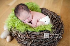 Wood Branch Newborn Owl Bird Nest Newborn Photography Photo Prop