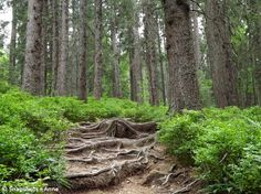 Root Path