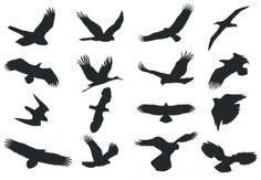 The vector file 'Bird Silhouette Vector dxf File' is AutoCAD DXF ( .dxf ) CAD file type, size is KB, under birds vectors. Flying Bird Silhouette, Eagle Silhouette, Silhouette Clip Art, Animal Silhouette, Autocad, Free Vectors, Bird Patterns, Art Icon, Cute Birds